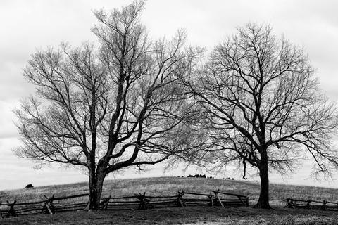 two trees and swollen Earth , a black and white landscape photograph by Keith Dotson