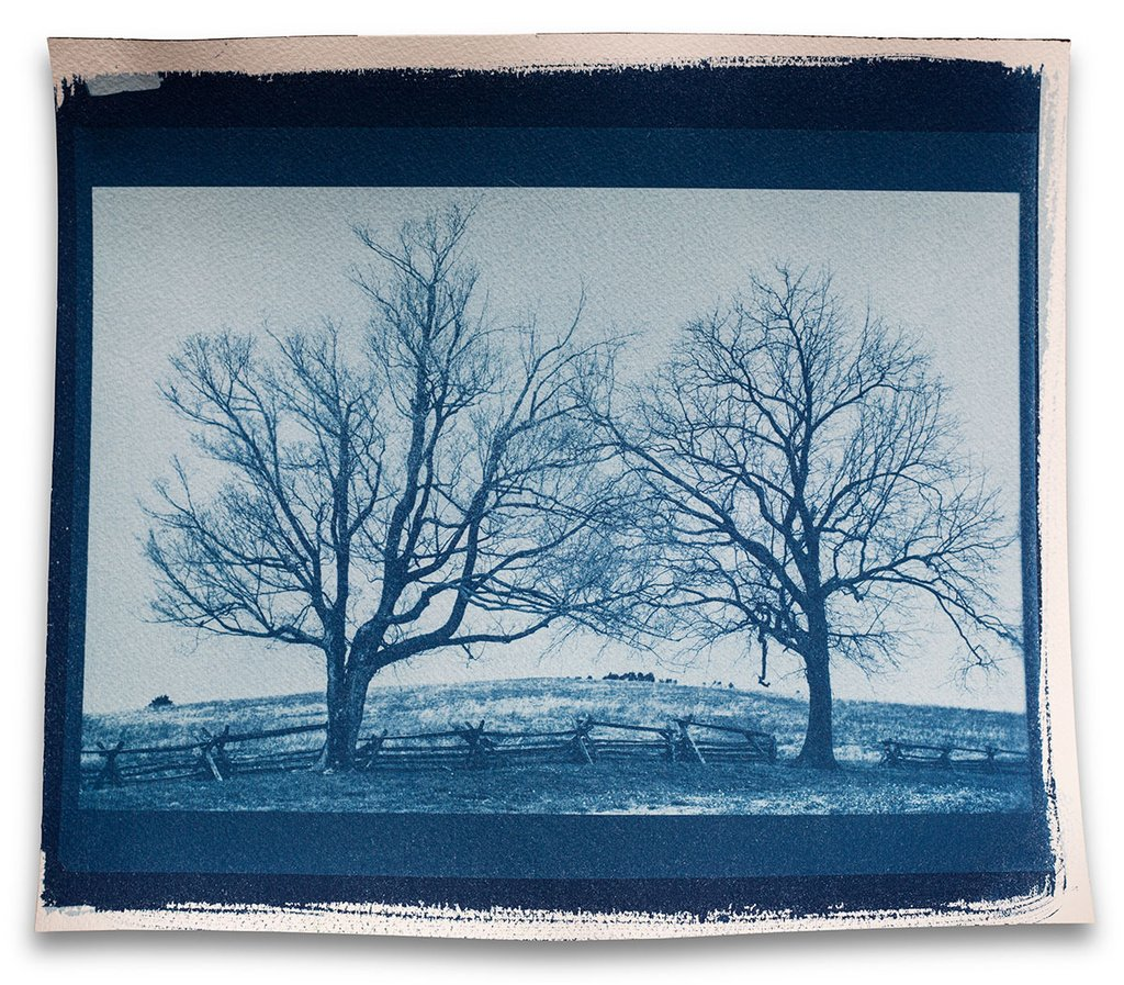 Landscape photograph of two trees: cyanotype printed from a digital negative