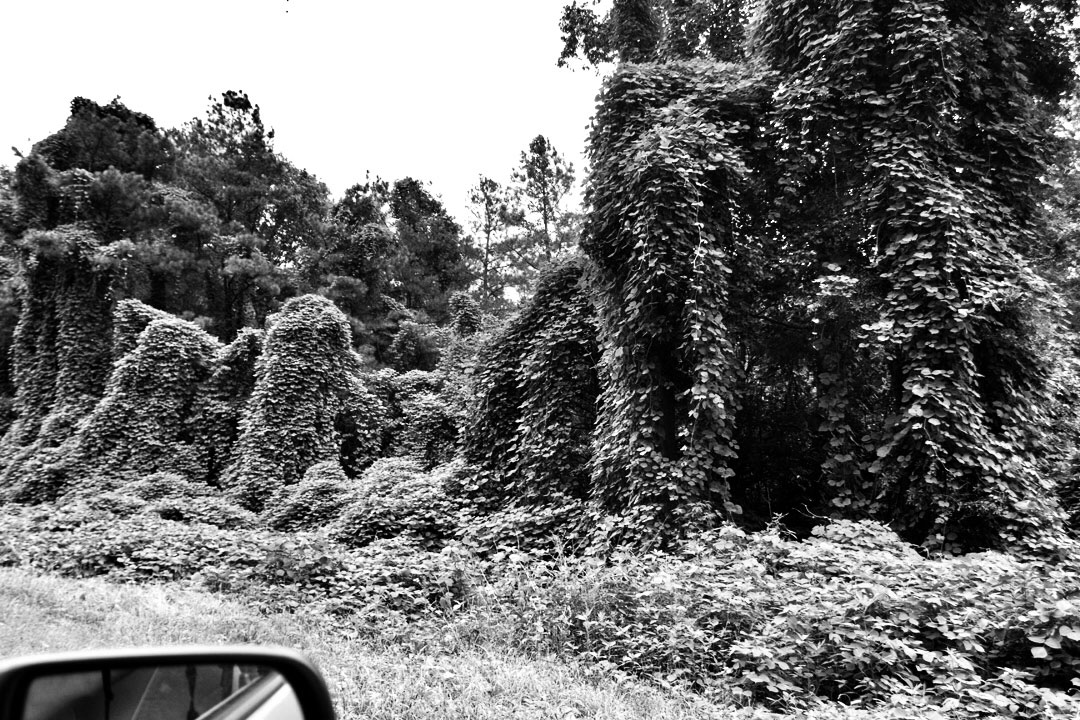 Black and white landscape photo of kudzu over trees beside the road in Tennessee