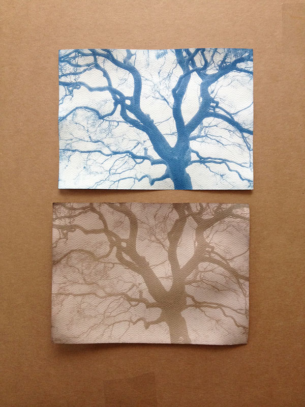 Here is a comparison of the cyanotype on top and a tannin toned cyanotype below