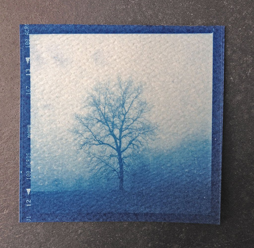 Foggy tree landscape, contact print from original 120mm medium format negative