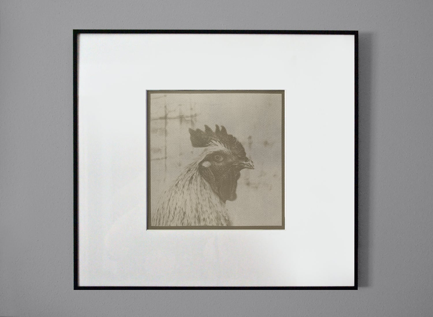 Coffee-toned rooster cyanotype print after being matted and framed