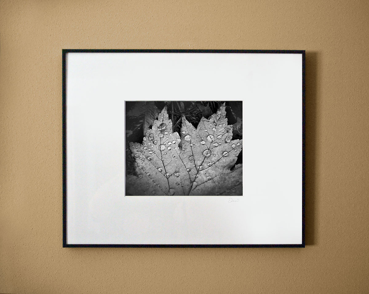 Black and white close-up photograph of sparkling rain drops magnifying the veins on a fallen autumn leaf. Shown matted and framed for illustration only.