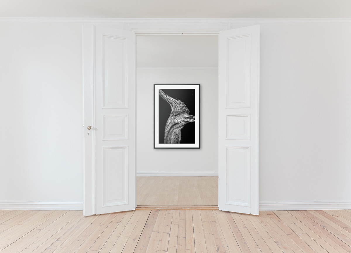The power of black and white photography to transform a room. Click the photograph to buy a copy of Twisted Tree - Utah for your own walls.