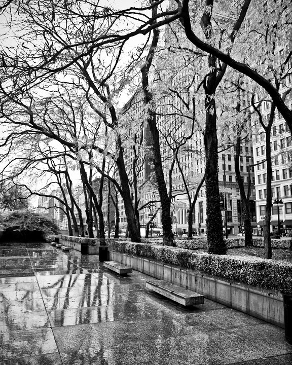 Rainy day benches at the Art Institute of Chicago in Chicago