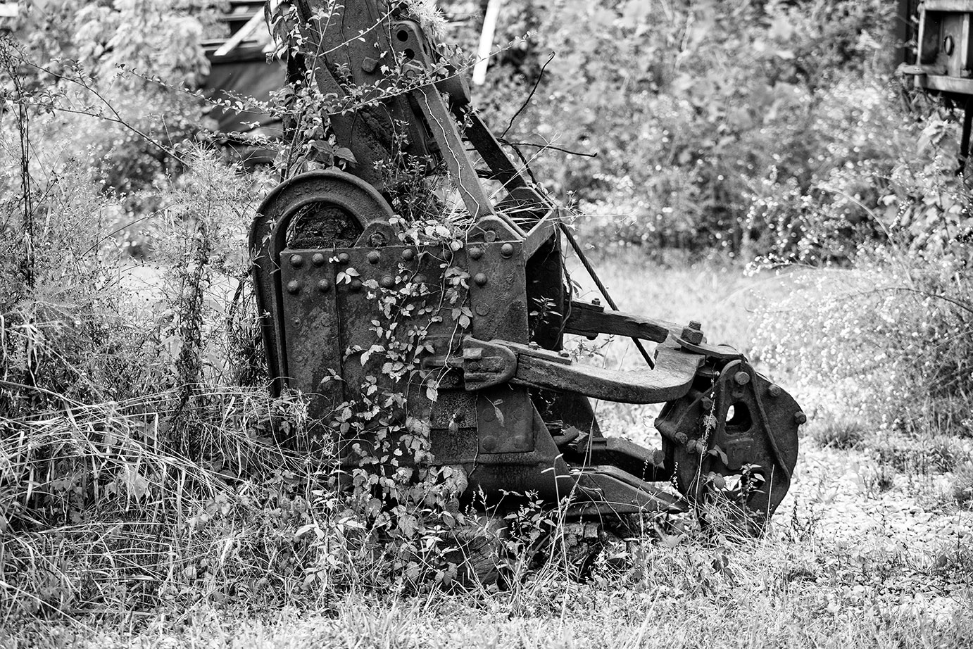Ivy growing up the sides of an abandoned steam shovel.