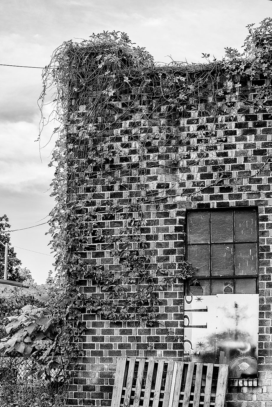 Ivy on a checkerboard brick shop building