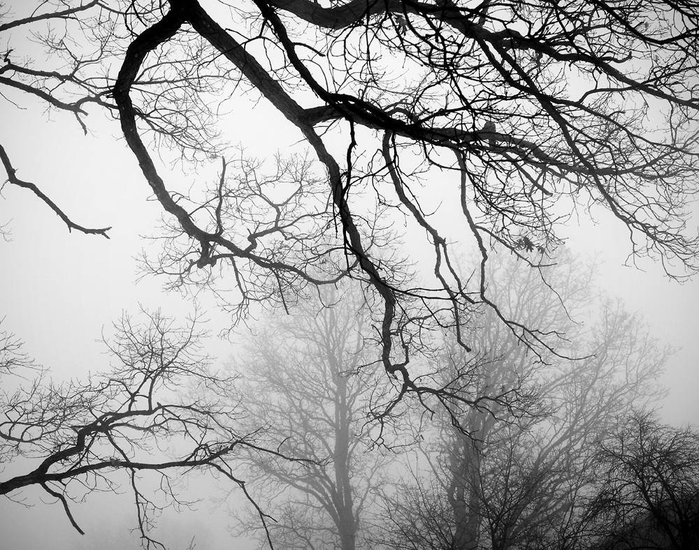 Black and white landscape photograph of trees in fog