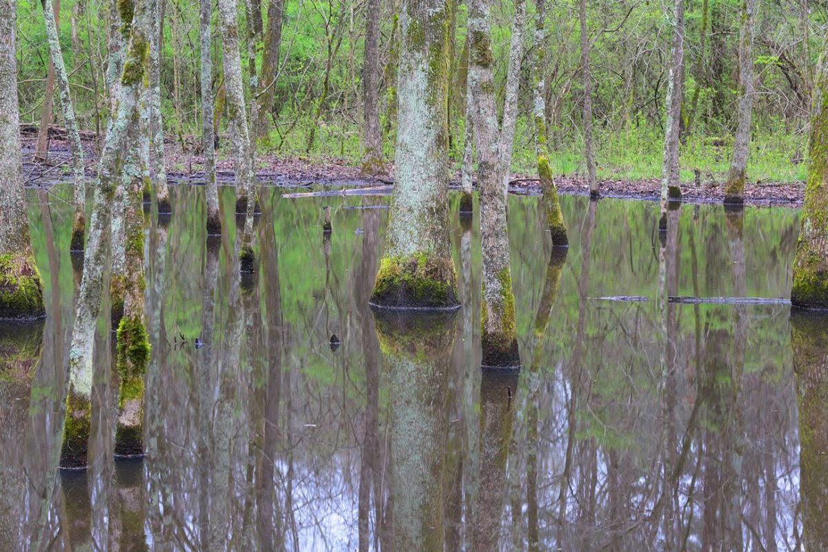 Wetland at Moccasin Bend National Archeological District