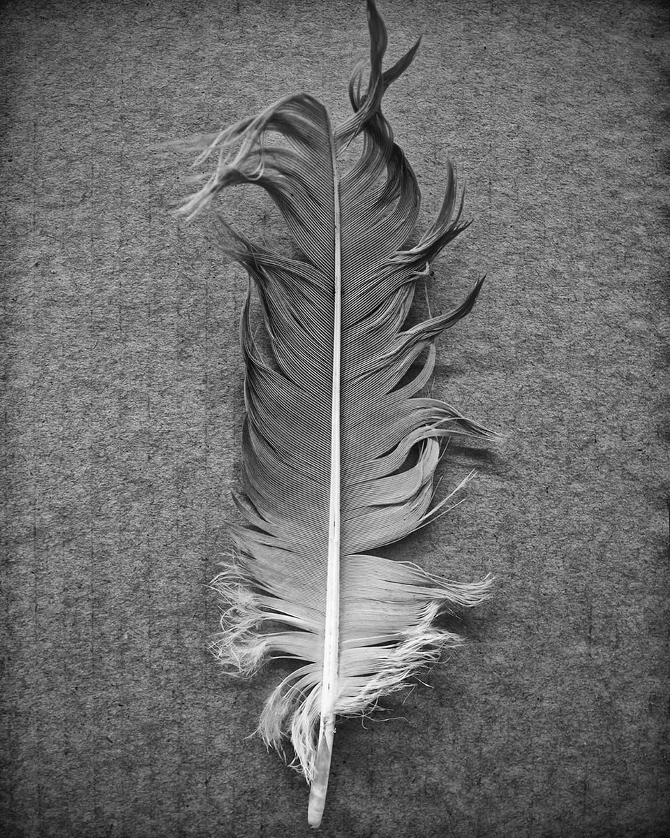 Zen Photography - Feather on Cardboard, black and white photograph by Keith Dotson. Click the photo to buy a print.