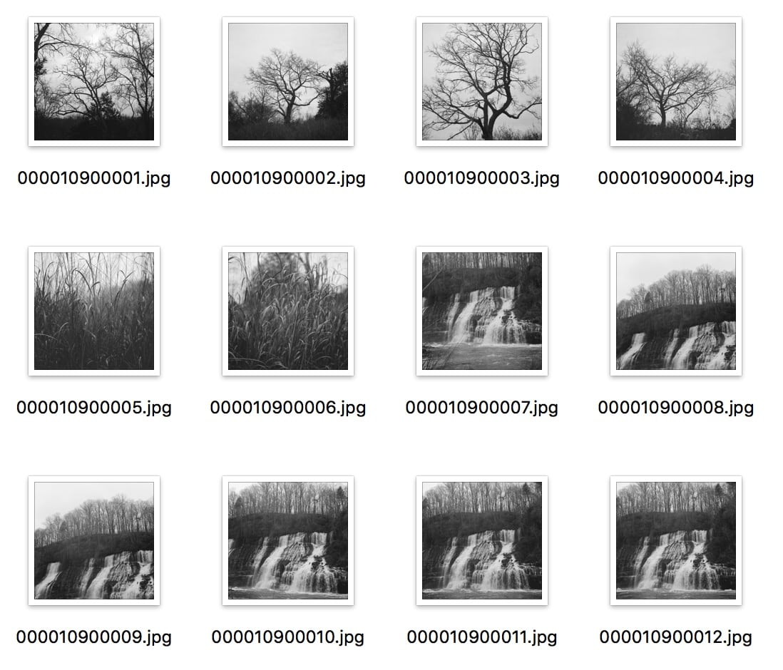 Thumbnails of all the scans on the roll, which only allows for a maximum of 12 exposures.