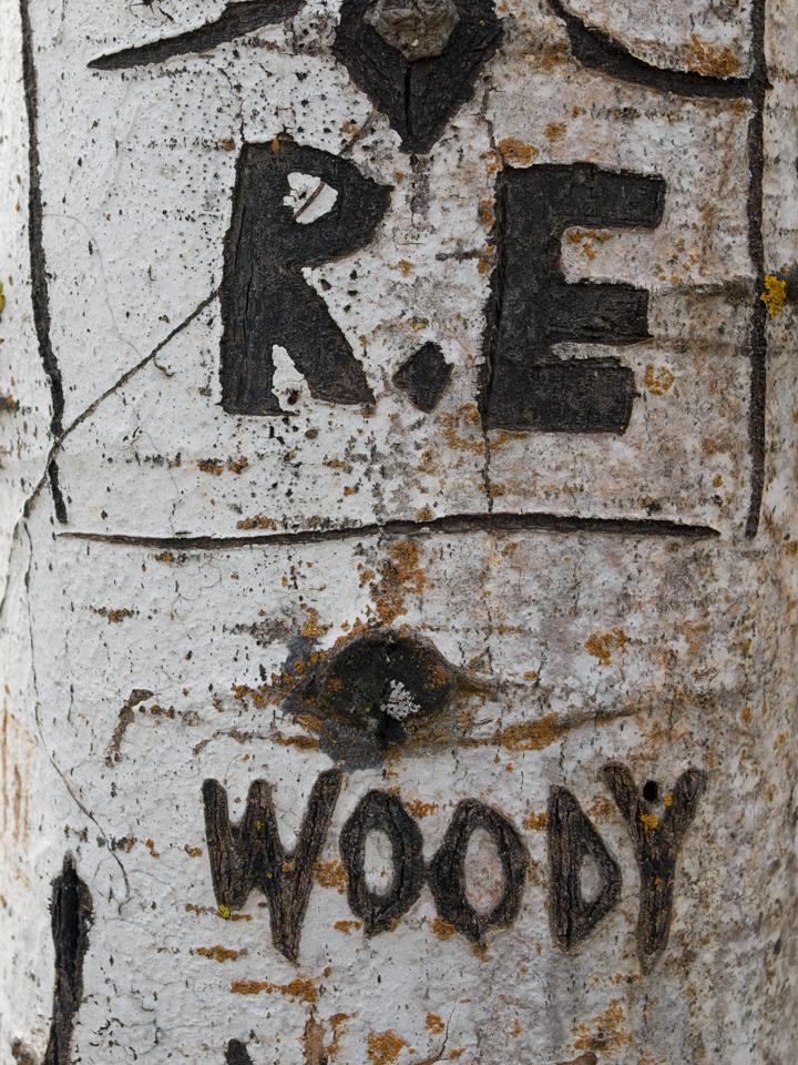 Carved birch tree