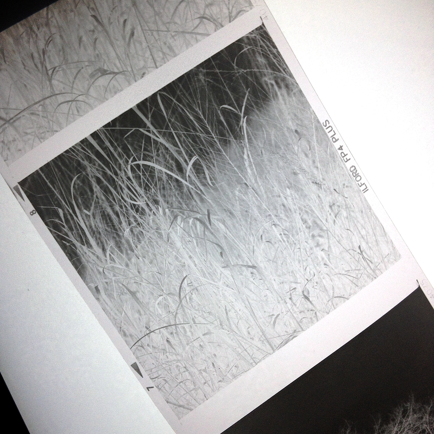 "Medium format negative of Keith Dotson's landscape photograph ""Winter Grasses."""