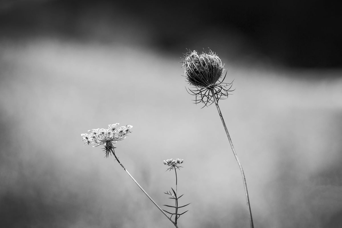 Summer Lace: Black and White Landscape Photograph by Keith Dotson.