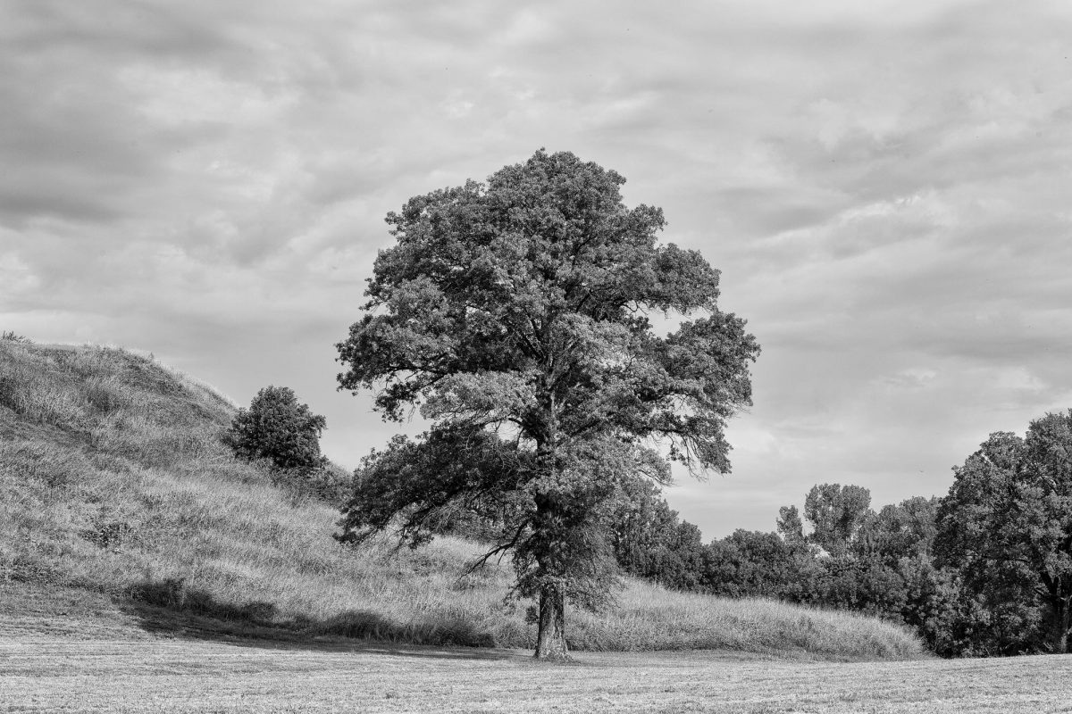 Tree Growing near Monk's Mound at Cahokia, Illinois: Black and White Landscape Photograph by Keith Dotson