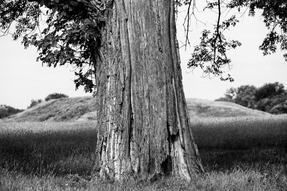 Old Tree and Ancient Mound, black and white photograph by Keith Dotson