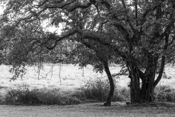 Morning landscape with dew drops, a black and white landscape photograph by Keith Dotson