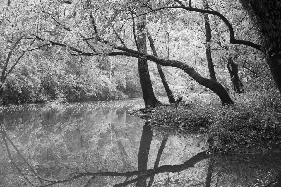 Late summer sunlight on a languid creek, black and white photograph by Keith Dotson.