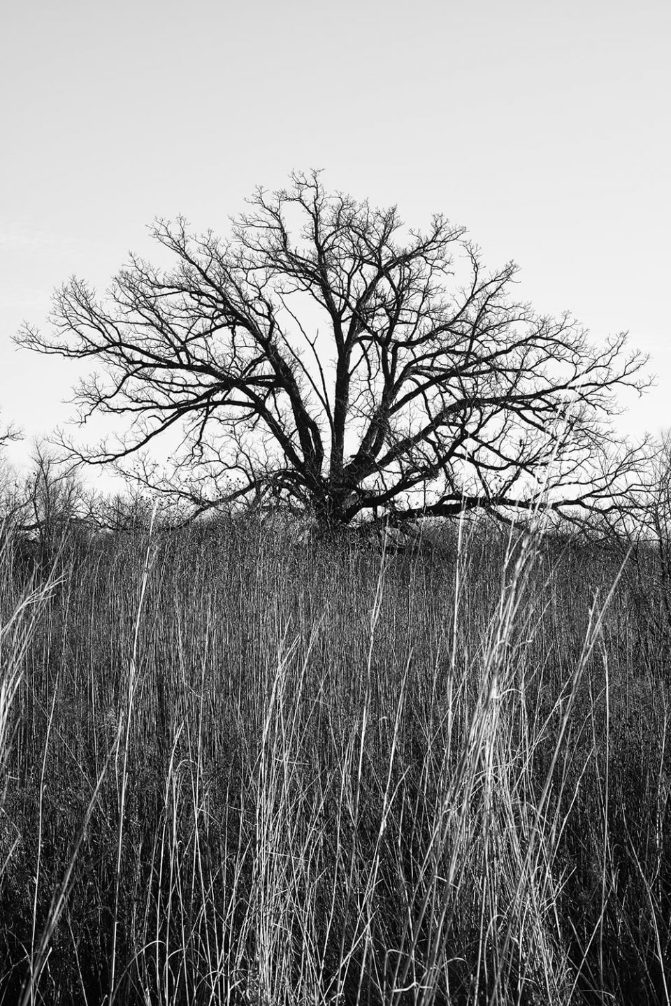 Black Tree in Tall Grass: Black and White Landscape Photograph by Keith Dotson. Click here to buy a fine art print.