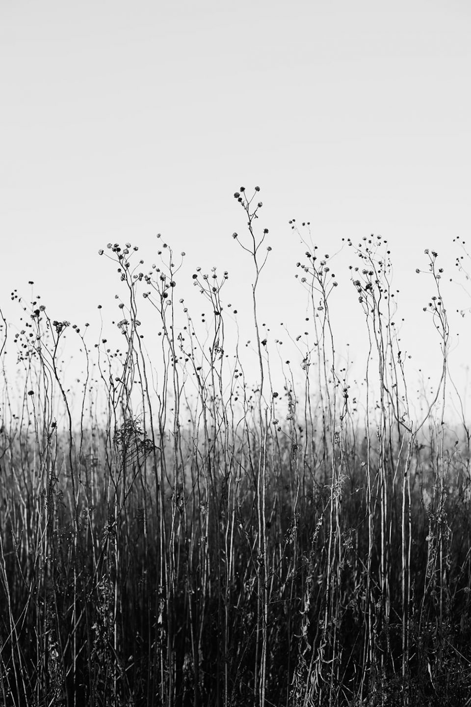 Stems and Prairie Sky: Black and White Landscape Photograph by Keith Dotson. Buy a fine art print here.