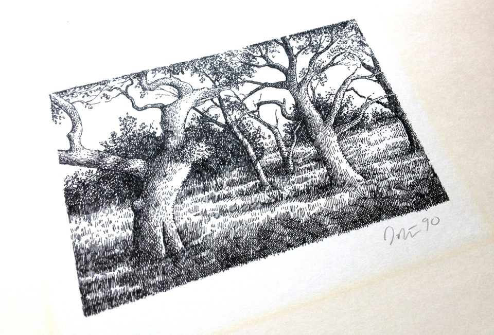 Ink drawing of a grove of trees, 1990