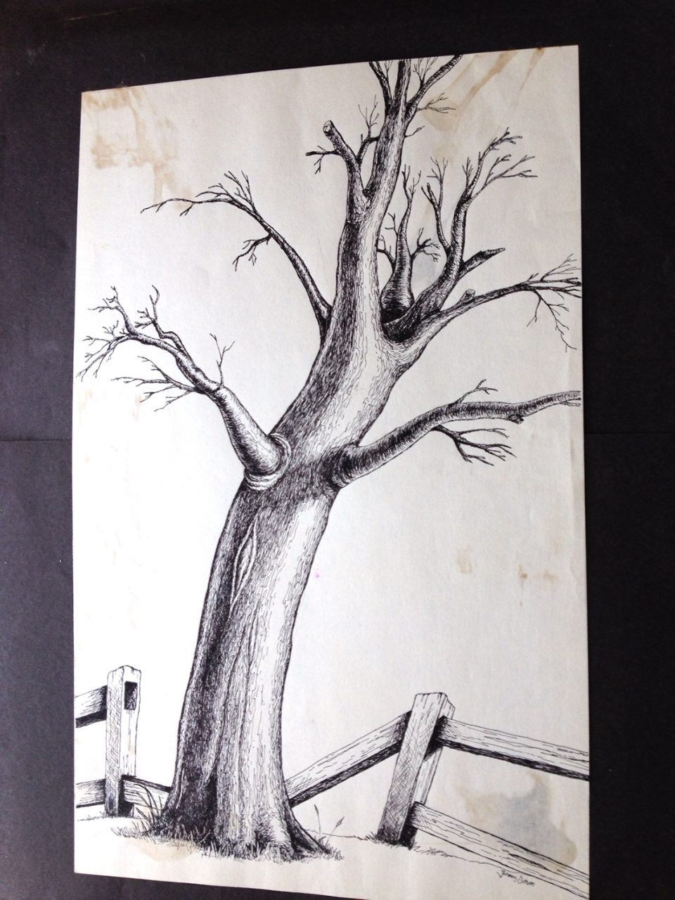 Ink drawing of a barren tree and wooden fence, completed when I was in middle school
