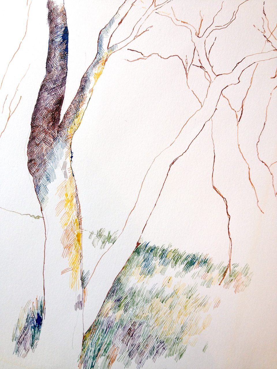 Unfinished drawing of tree trunks and grass made with colored inks, 1990
