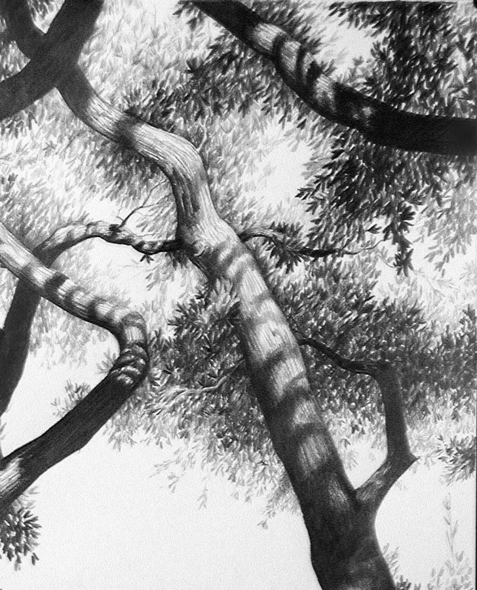 Ebony pencil on hot press watercolor paper (detail), 2000. This drawing most closely resembles some of the photographs I would later make of trees.