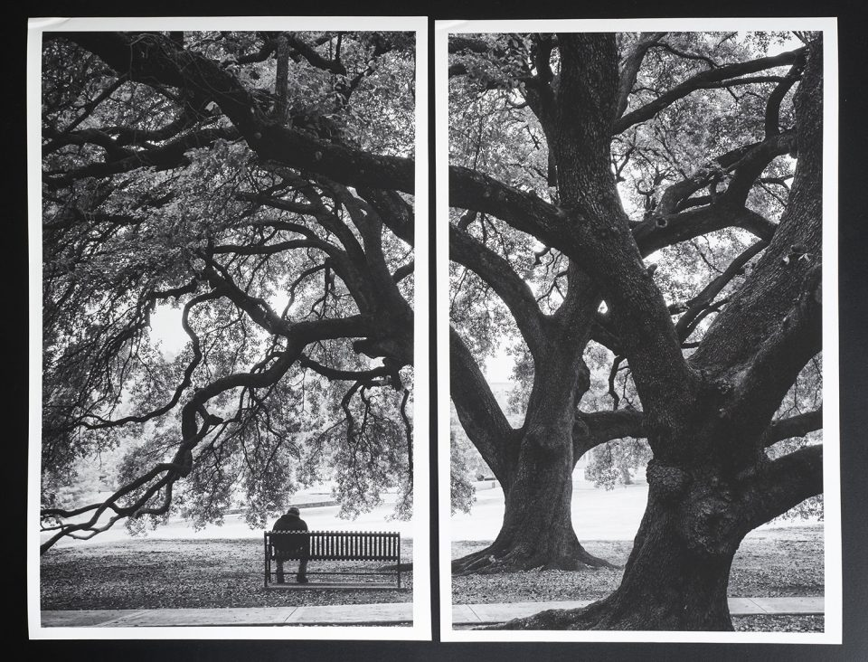 """Two side-by-side prints of my photograph """"In the Shade of the Mighty Oaks,"""" printed on Hahnemühle Photo Rag Matt 308 gsm."""