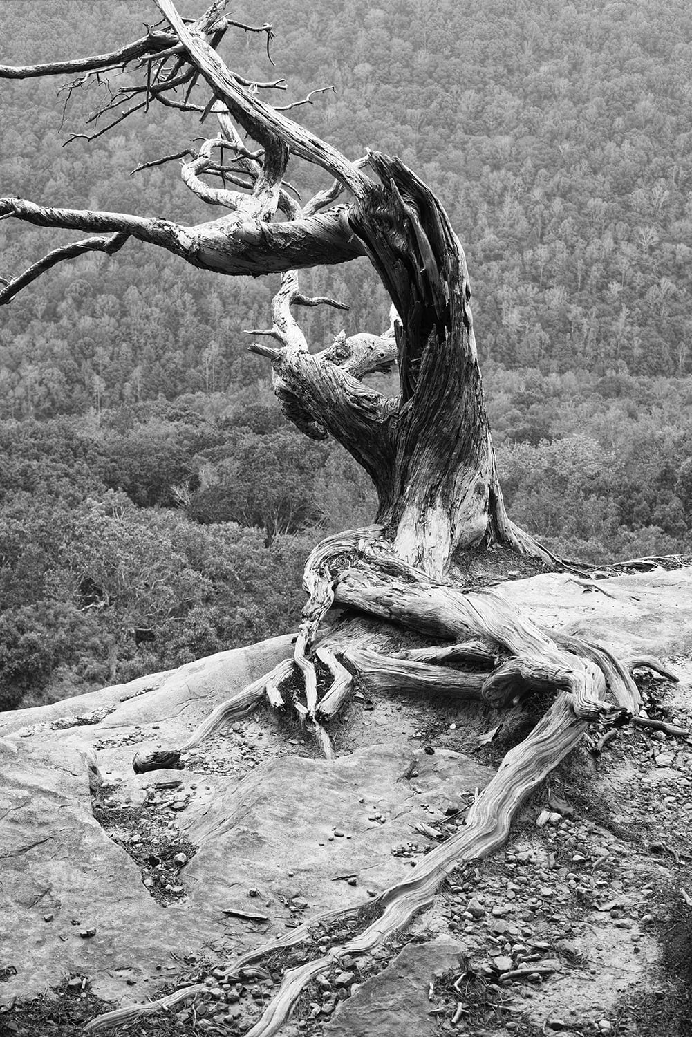 Living on the Edge, a black and white photograph by Keith Dotson.