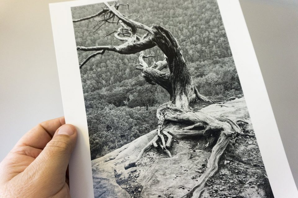 Inkjet pigment print on Canson Platine Fiber Rag paper. This paper has a 100-percent cotton base with a baryta-like surface coating for printing.