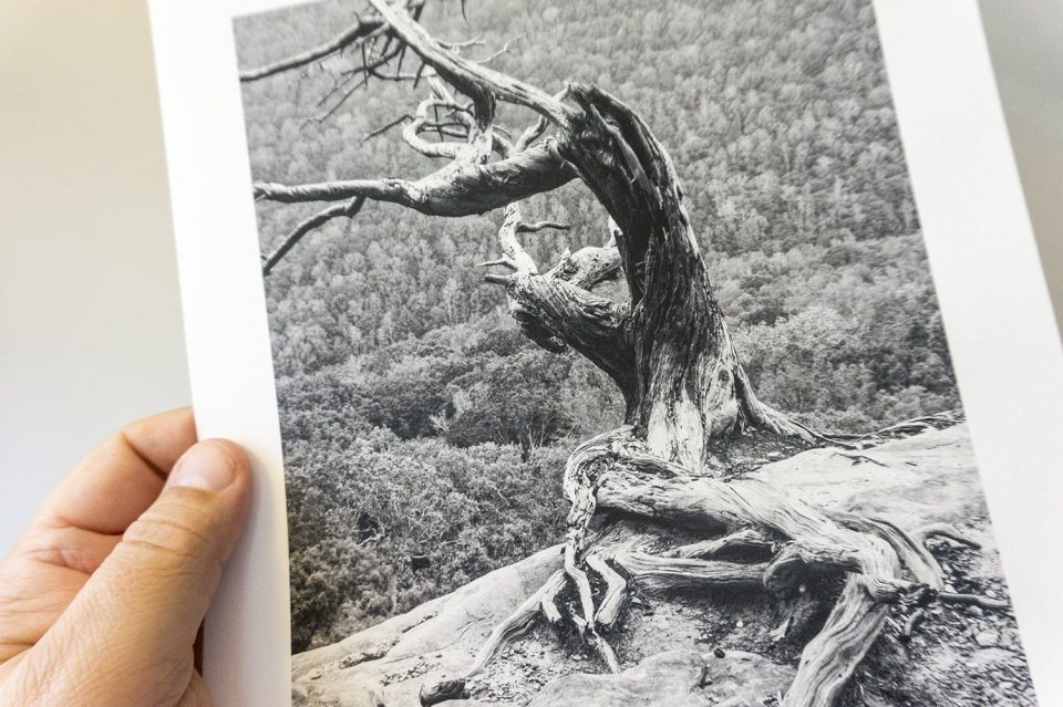 Pigment inkjet print on Moab Entrada Rag, which is a bright white paper made of 100-percent cotton and a matte surface.