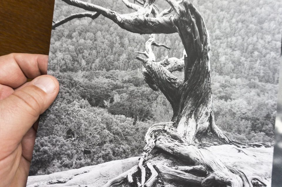 Black and white print on Ilford digital silver gelatin matte surface paper. This is a silver gelatin print on baryta surface fiber-base paper too, but with a very matte finish.