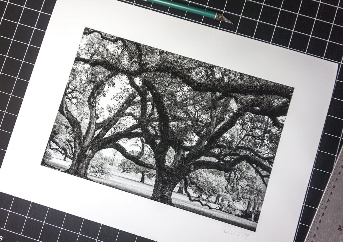 Picture of a black and white photograph of big southern oak trees with resurrection ferns, by Keith Dotson Photography.