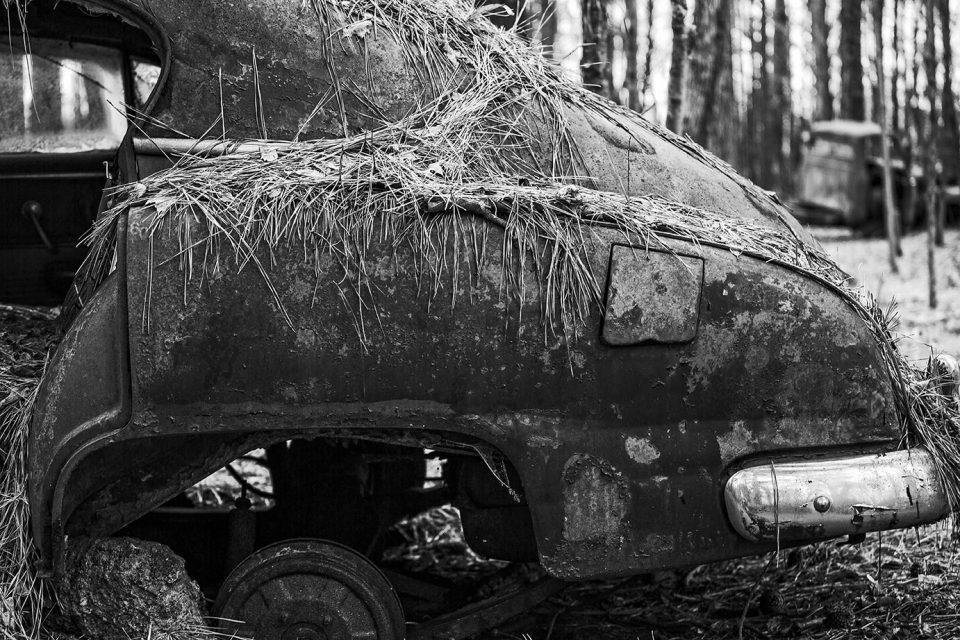 Pine straw on a rusty vintage sedan.