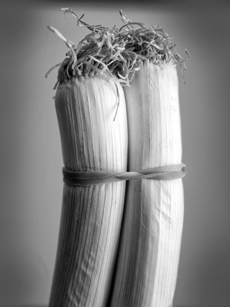 Photo of two onions bound together by photographer Keith Dotson