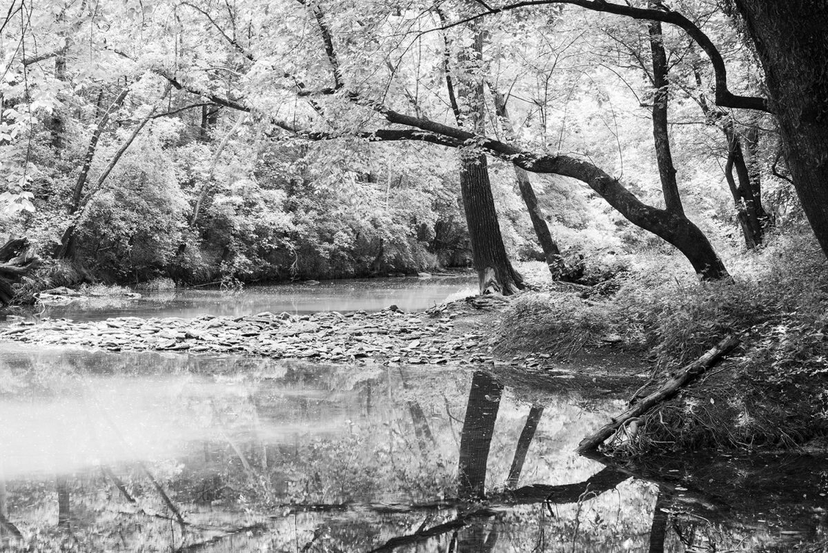 Trees Reflecting on a Calm Creek Black and White Landscape Photograph by Keith Dotson. Click to buy a print.