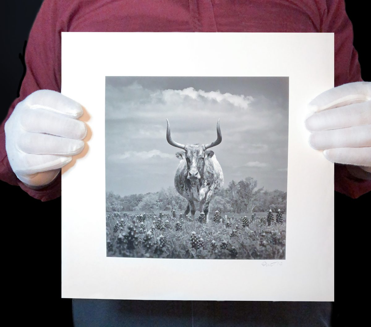 Photographer Keith Dotson holds a new print of his image of an old Texas longhorn.