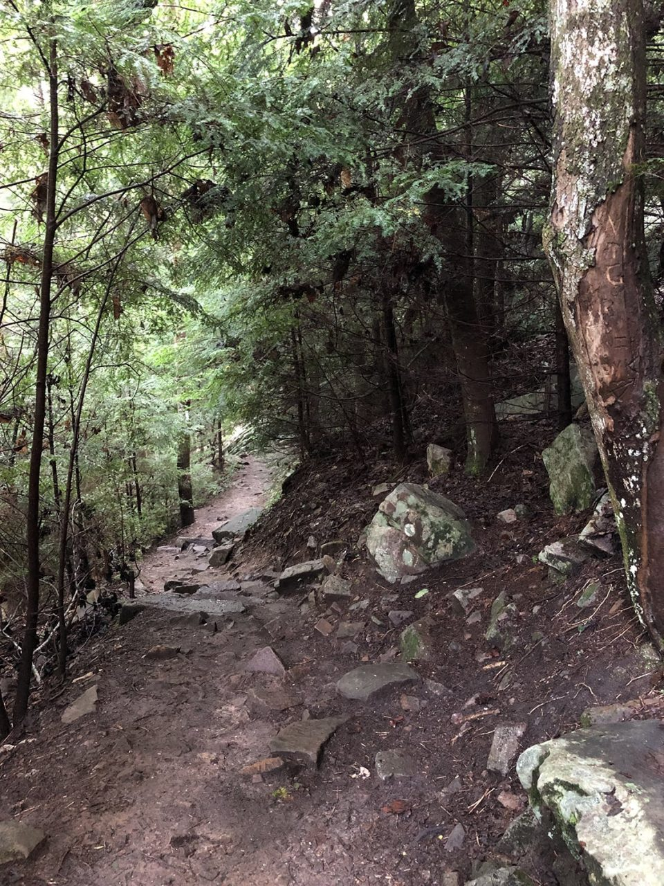 A look at the trail descending to the waterfall. It's only a quarter-mile hike.