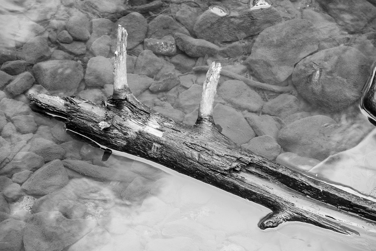 Driftwood floating in the basin at fall creek falls tennessee