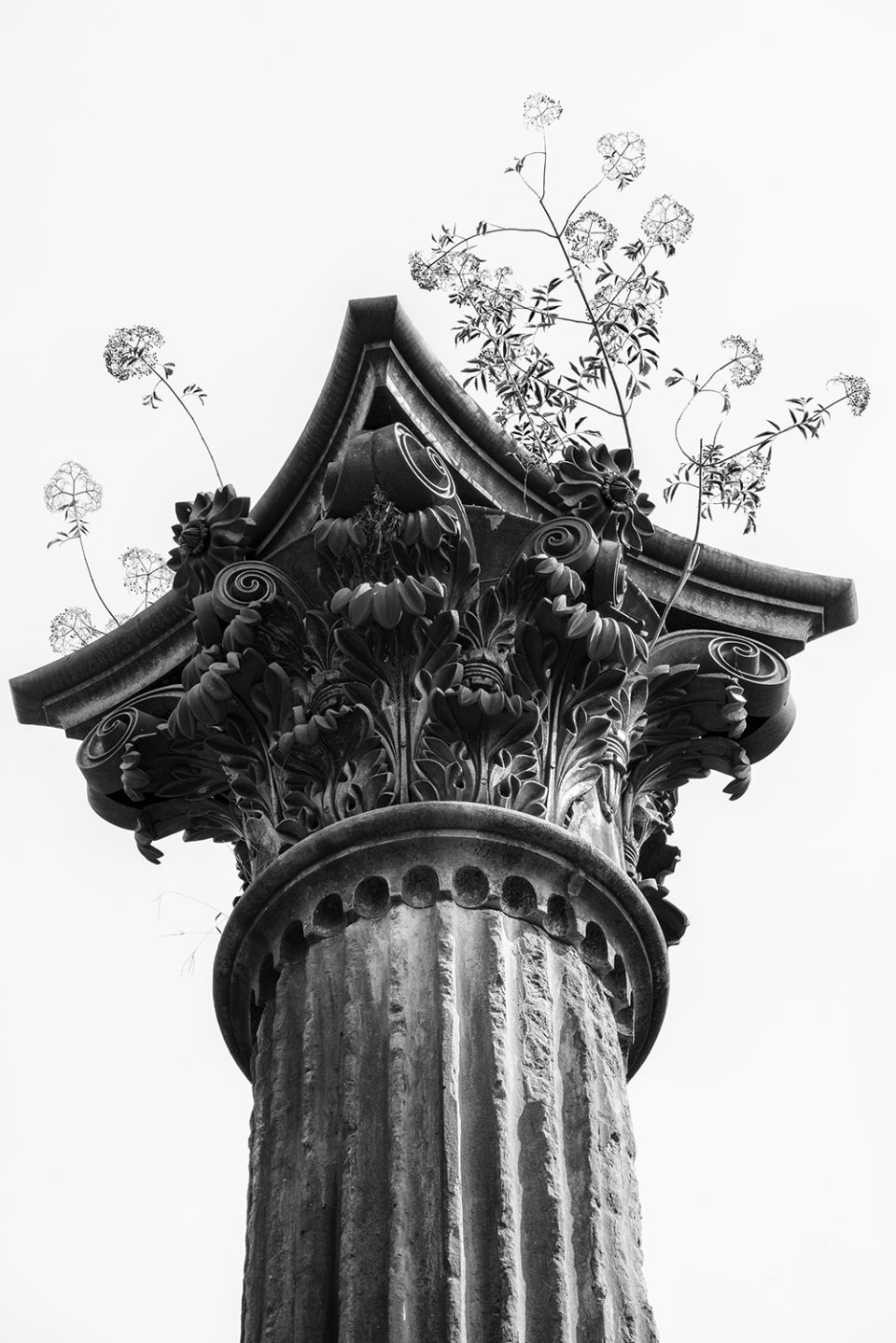 Mysterious column with plants growing from its capital, black and white photograph by Keith Dotson. Click to buy a fine art print.