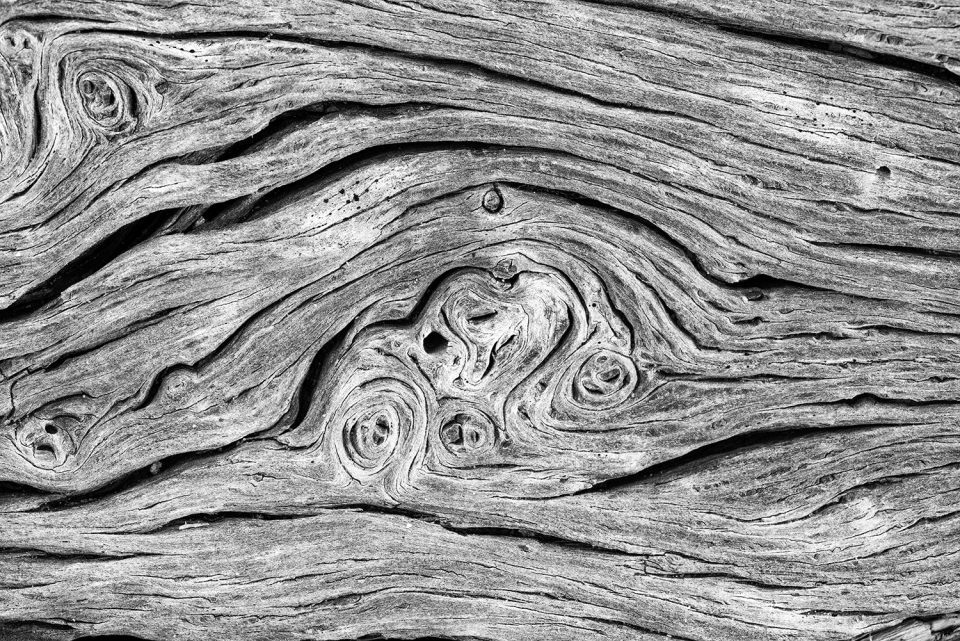 A macro photograph of driftwood textures by Keith Dotson.