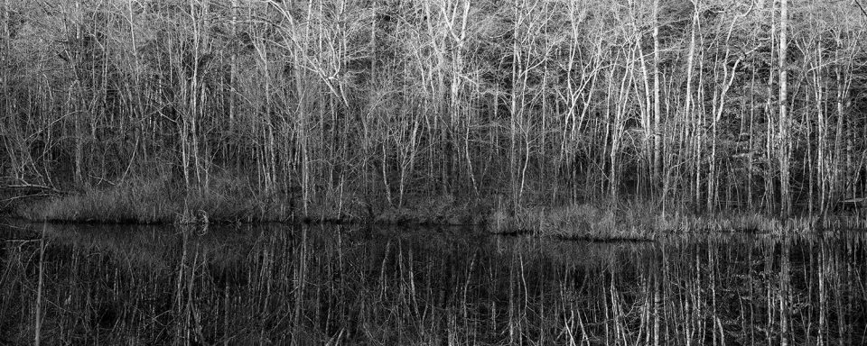 Black and white photograph of the morning light on the trees along the opposite shore of the pond.