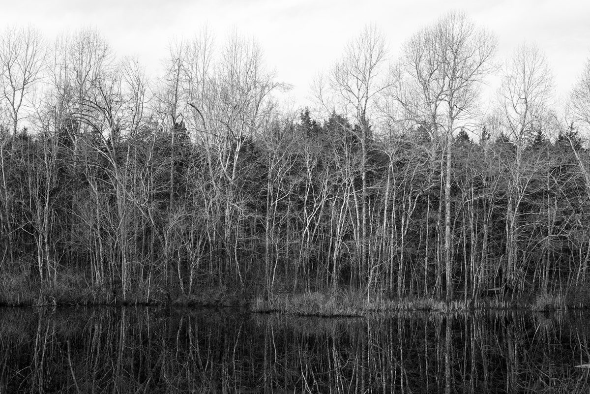 Black and white photograph of morning light catching barren winter trees along the edge of a pond.