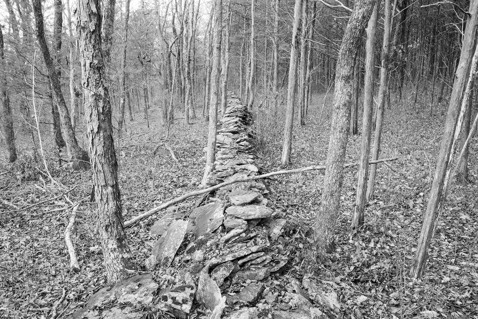 Old Stone Wall Winding through the Woods - Black and White Photograph by Keith Dotson. Click to buy a fine art print.