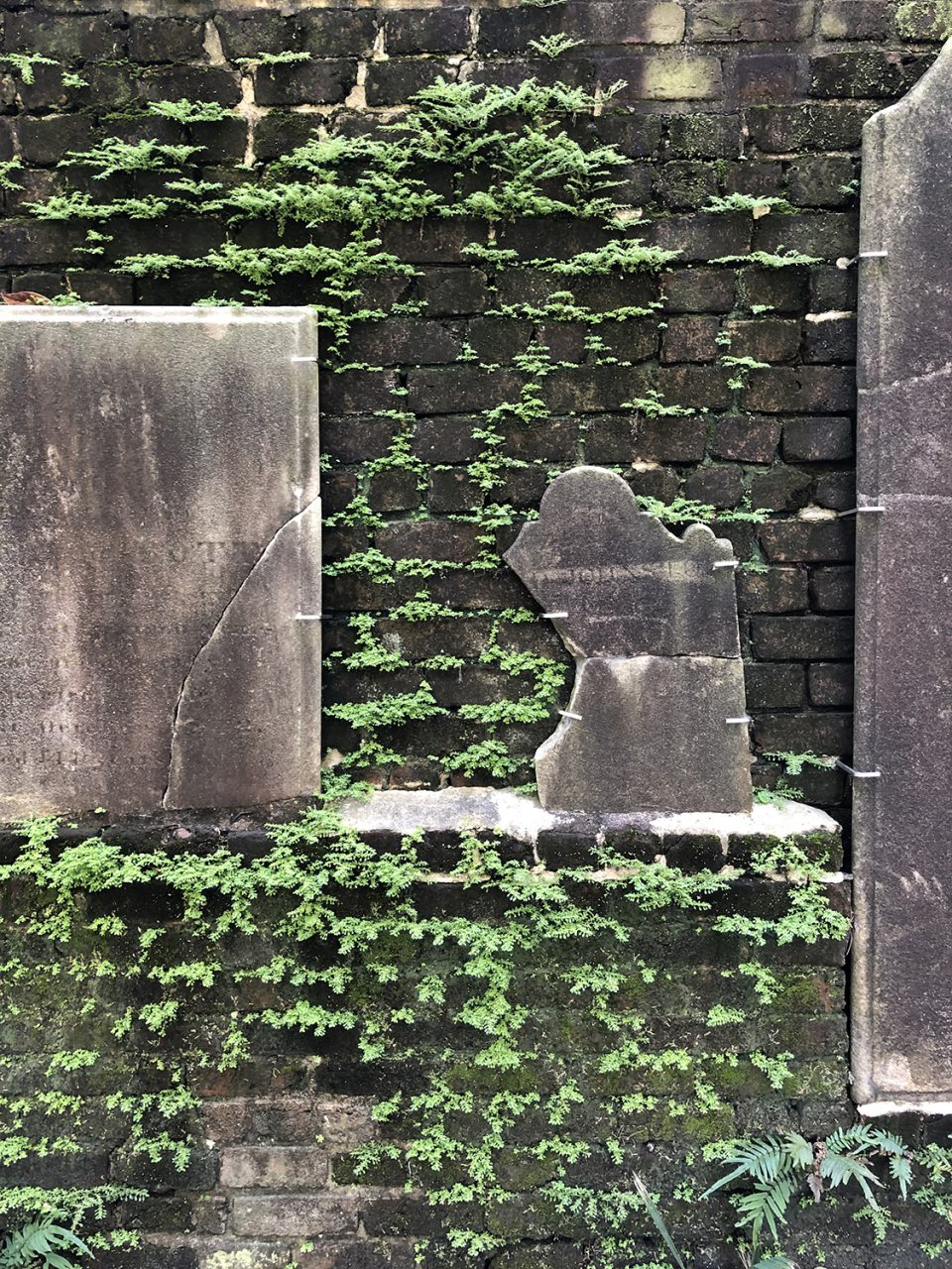 Old gravestones and new growth: dislocated headstones are mounted on a brick wall that's sprouting greenery in Savannah's Colonial Cemetery.