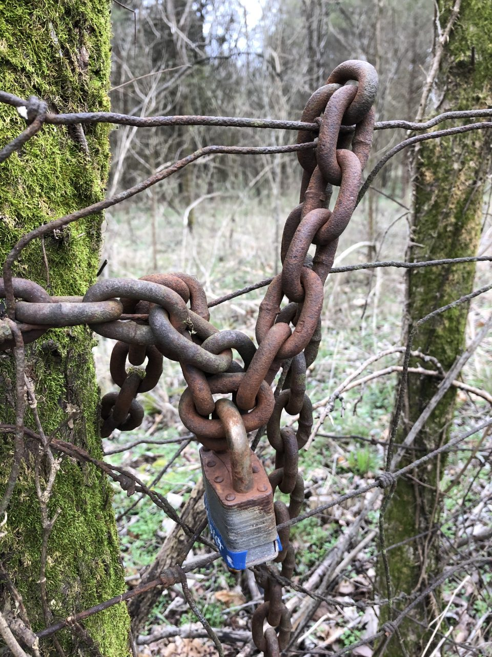 Along the way I found this rusty old chain hanging on a wire fence.