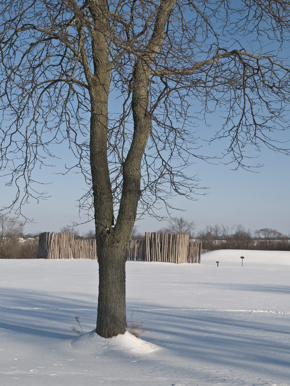 A look at some of the reconstructed palisade wall at Aztalan Mound Site, Wisconsin