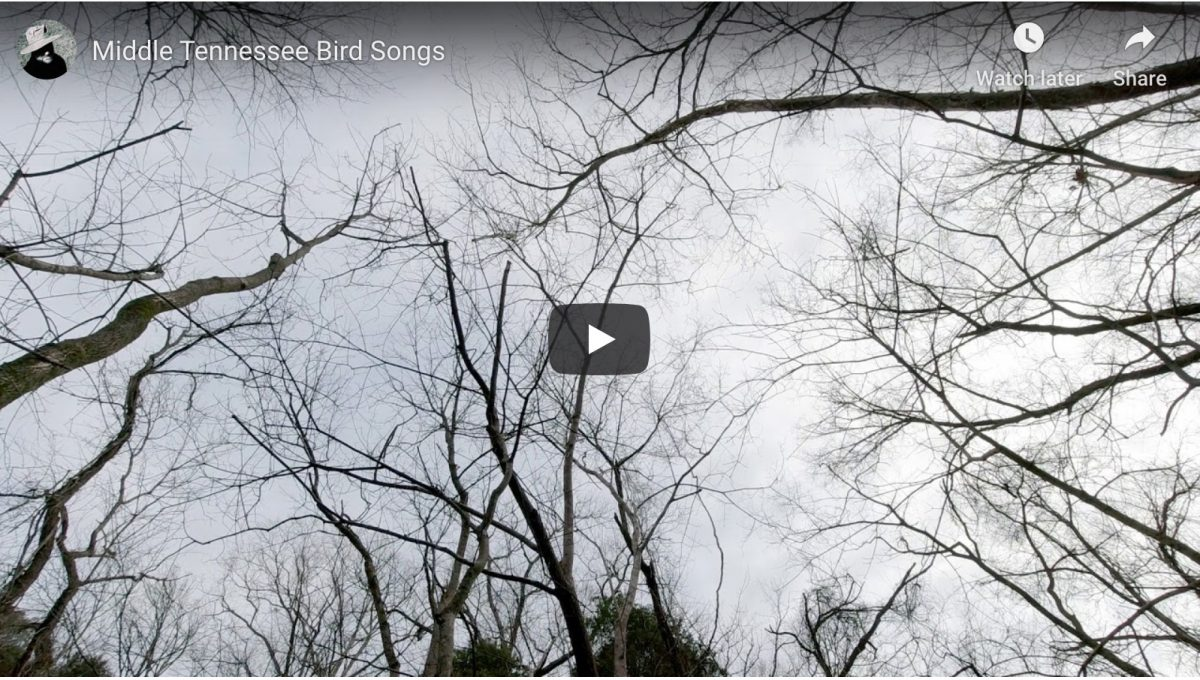 Bird songs on video