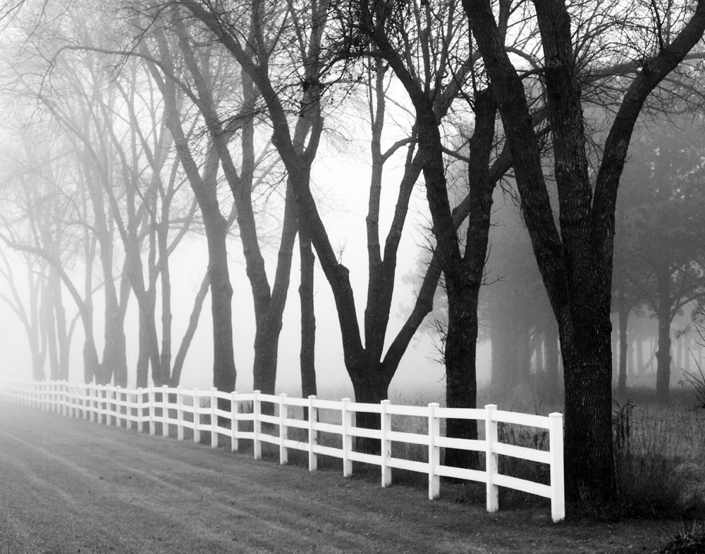 Black trees and white fence, a black and white photograph by Keith Dotson. Click to buy a fine art print.